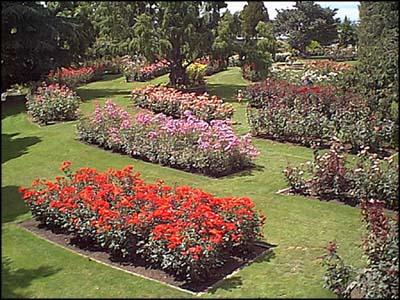 te awamutu rose gardens - Pictures Of Rose Gardens